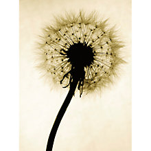 Buy Backlit Dandelion Online at johnlewis.com