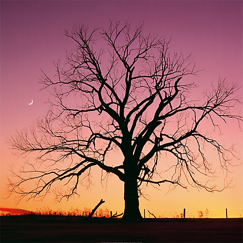 Buy Arboreal Afterglow Online at johnlewis.com