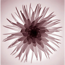 Buy Gill Copeland - Translucent Flower Print Online at johnlewis.com