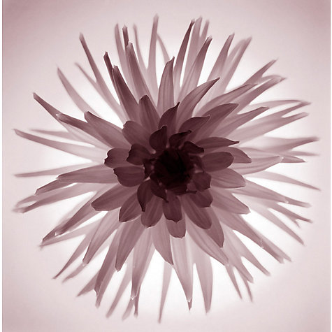 Buy Translucent Flower Print Online at johnlewis.com