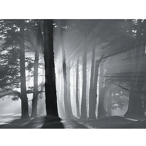 Buy Mark Citret - Morning Harding Park Online at johnlewis.com