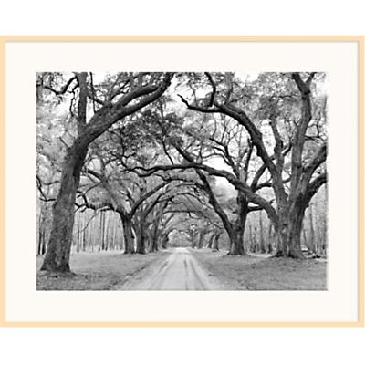 J Morris – Oak Arches