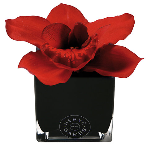 Buy Hervé Gambs Orchid Flowers in a Mini Glass Cube, Red Online at johnlewis.com