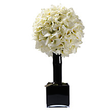 Buy Hervé Gambs Orchid Flower Topiary in a Glass Cube, White, Large Online at johnlewis.com
