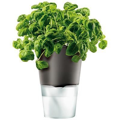 Eva Solo Herb Pot, Dark Grey