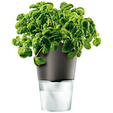 Buy Eva Solo Herb Pot, Dark Grey Online at johnlewis.com