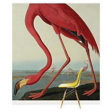 Buy Surface View Greater Flamingo Wall Mural, 240 x 265cm Online at johnlewis.com