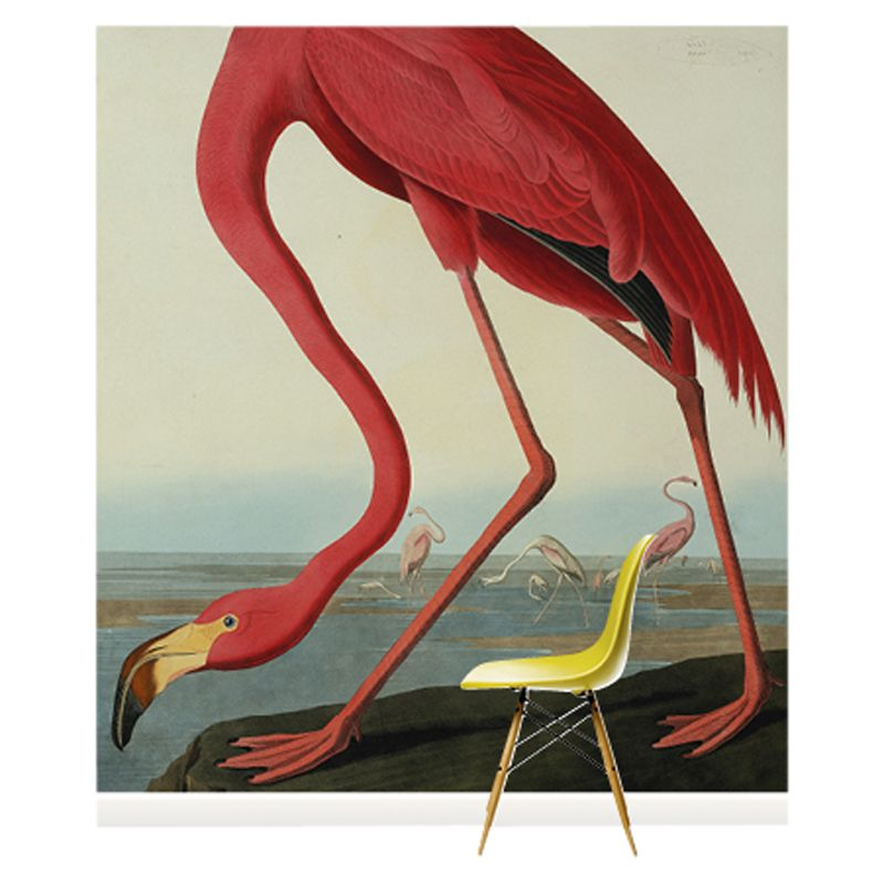 Surface View Surface View Greater Flamingo Wall Mural, 240 x 265cm