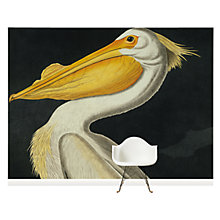 Buy Surface View American White Pelican Wall Mural, 360 x 265cm Online at johnlewis.com