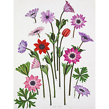 Buy Royal Horticultural Society, John Paul Wellington Furse - Anemone Paonia, Stellata & Hortensis Online at johnlewis.com