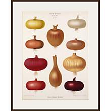Buy Royal Horticultural Society, Ernst Benary - Tab XVI (onion) Online at johnlewis.com