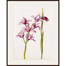 Buy Royal Horticultural Society, Lillian Snelling - Cymbidium Alexanderi gx Online at johnlewis.com