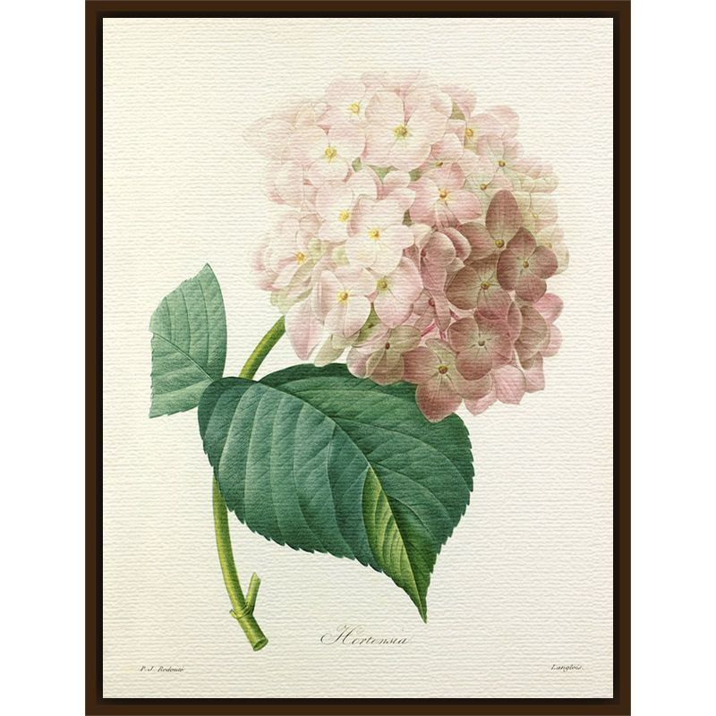 Royal Horticultural Society Royal Horticultural Society, Pierre Joseph Celestin Redouté - Hortensia