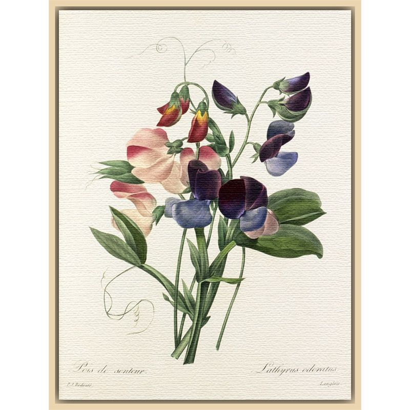 Royal Horticultural Society Royal Horticultural Society, Pierre Joseph Celestin Redouté - Plate 113