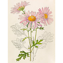 Buy Royal Horticultural Society, Lillian Snelling & Stella Ross Craig - Plate 9566 Online at johnlewis.com