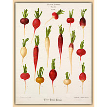 Buy Royal Horticultural Society, Ernst Benary - Tab XX (radish) Online at johnlewis.com