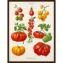 Buy Royal Horticultural Society, Ernst Benary - Tab XXIV (tomato) Online at johnlewis.com