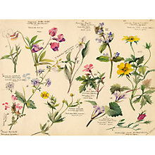 Buy Royal Horticultural Society, Lillian Snelling - Wildflower Composite Online at johnlewis.com