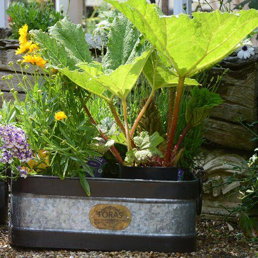 Foras Bircham Vintage Planter
