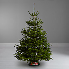 Buy John Lewis Nordmann Fir Real Christmas Tree with Stand, 6-7ft Online at johnlewis.com