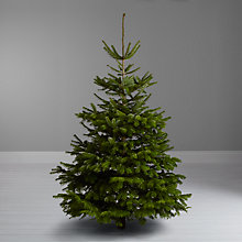 Buy John Lewis Nordmann Fir Real Christmas Tree, 6-7ft Online at johnlewis.com