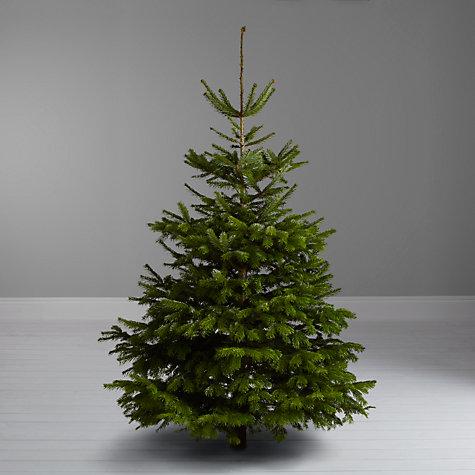 Buy John Lewis Nordmann Fir Real Christmas Tree, 7-8ft ...