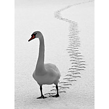 Buy CCA Personalised Swan Tracks Charity Christmas Cards Online at johnlewis.com