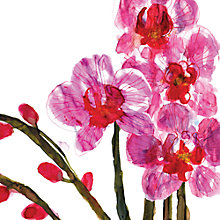 Buy Louise Cunningham - Orchids Online at johnlewis.com
