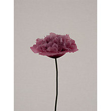 Buy Claire Brooker - Pink Rose Online at johnlewis.com