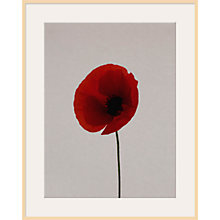 Buy Claire Brooker - Red Poppy Online at johnlewis.com