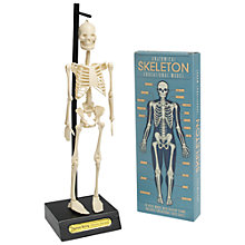 Buy Rex Anatomical Skeleton Model Online at johnlewis.com