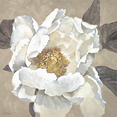 Buy Adelene Fletcher- Paperwhite Poppy Print on Canvas, 48 x 48cm Online at johnlewis.com