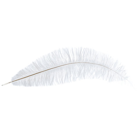 Buy John Lewis Ostrich Feather, Medium Online at johnlewis.com