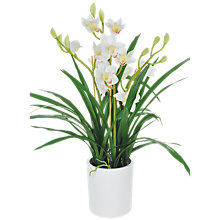 Buy John Lewis Potted Cymbidium, White, Large Online at johnlewis.com