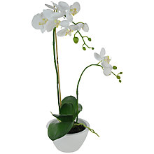 Buy John Lewis Potted Phalaenopsis, White, Small Online at johnlewis.com
