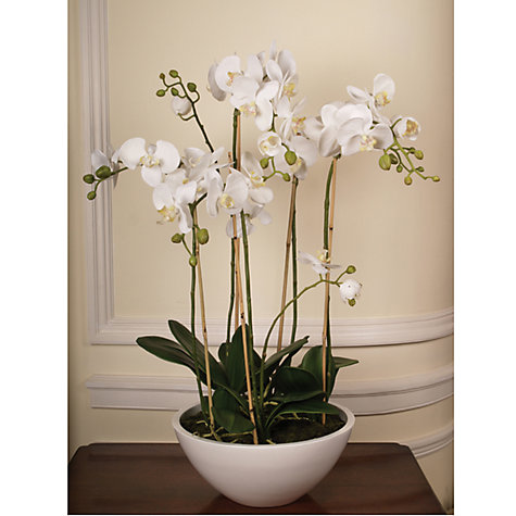 Buy John Lewis Potted Phalaenopsis, White, Multi Height Online at johnlewis.com