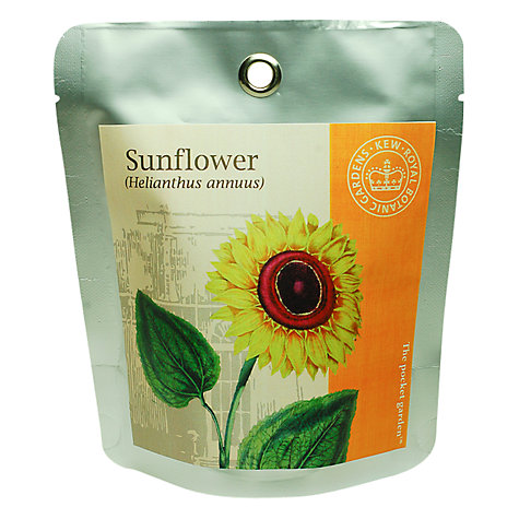 Buy Kew Gardens Pocket Garden, Sunflower Online at johnlewis.com