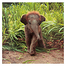 Buy Great British Card Company Blank Baby Elephant Greeting Card Online at johnlewis.com