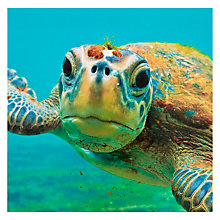 Buy Paperhouse Blank Green Turtle Greeting Card Online at johnlewis.com