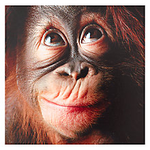 Buy Paperhouse Blank Orangutan Greeting Card Online at johnlewis.com