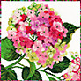 Bothy Threads Hydrangea Cross Stitch Kit