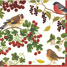 Buy Caspari Birds Napkins, Pack of 20 Online at johnlewis.com