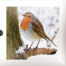 Buy Dark Room Robins Christmas Charity Cards, Box of 16 Online at johnlewis.com