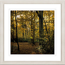 Buy David Purdie - Park Wood Autumn Framed Print, 65 x 65cm Online at johnlewis.com