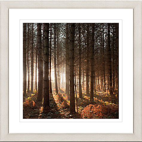 Buy David Purdie - Pines Framed Print, 65 x 65cm Online at johnlewis.com