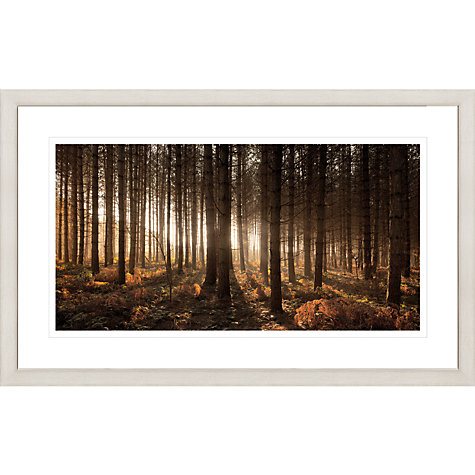 Buy David Purdie - Pines Framed Print, 67 x 107cm Online at johnlewis.com