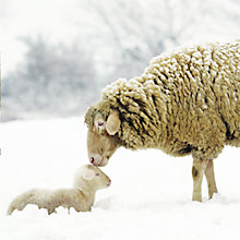 Buy Almanac Mother And Child Christmas Cards, Pack of 8 Online at johnlewis.com