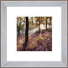 Buy Mike Shepherds- Autumn Sunbeam Framed Print, 50 x 50cm Online at johnlewis.com