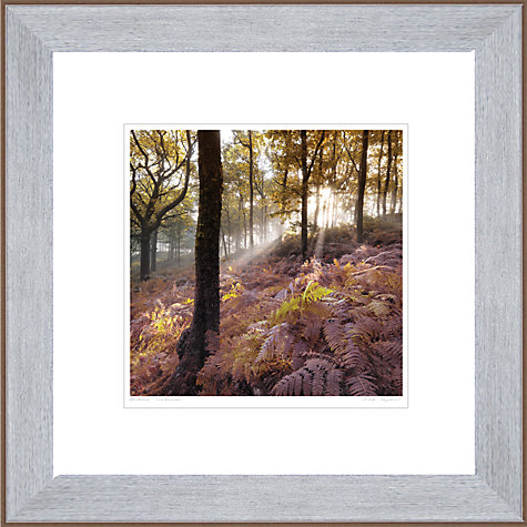 Buy Mike Shepherd - Autumn Sunbeam Framed Print, 50 x 50cm Online at johnlewis.com