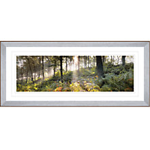 Buy Mike Shepherd - Woodland Vision 2 Framed Print, 56.5 x 114.5cm Online at johnlewis.com